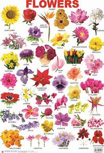 Flower Chart In English Indian Flower Name List With Image Picture In France For