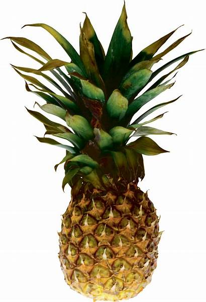 Pineapple Transparent Ananas Icon Clipart Clip Juice