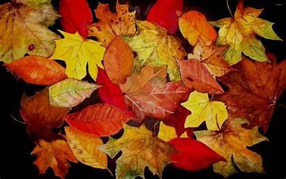 Leaves Autumn Ladybug Wallpapers Fall Leaf Background