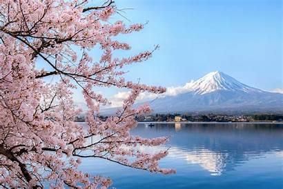 Cherry Blossoms Istock Around Travel Slideshow