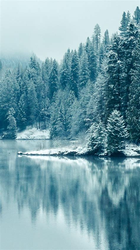 Snow Wallpaper Iphone Hd by Pine Forest Lake Snow Iphone 6 Plus Hd Wallpaper Ipod