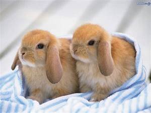 Cutest bunny pic? Poll Results - Baby Bunnies - Fanpop