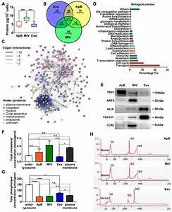Distinct Protein  Lipid And Rna Profiles Of Ev Subtypes