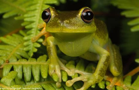 interesting facts about frogs just fun facts