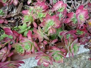 Plante Succulente Espèces Représentatives : plante grasse page 3 paris c t jardin ~ Nature-et-papiers.com Idées de Décoration
