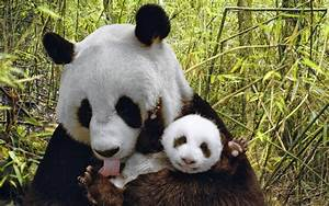 Wallpaper  Wallpaper  Cute Animals  U0026quot Gift Of Nature U0026quot