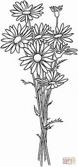 Colorear Dibujos Coloring Daisy Daisies Flower Margaritas Supercoloring sketch template
