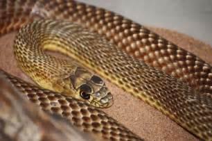 Non Venomous Snakes Pennsylvania