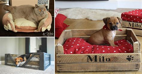 paniers faits maison pour votre chien ou votre chat