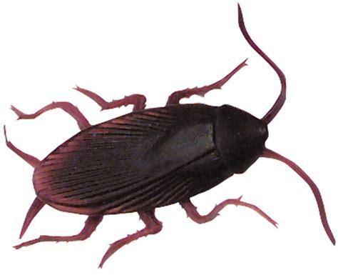 wholesale fake plastic cockroaches  sale