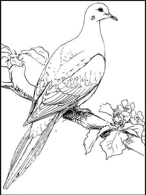 dove coloring pages   print dove coloring pages