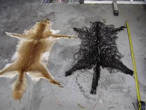 stupid and dead cat pictures - Gallery | eBaum's World