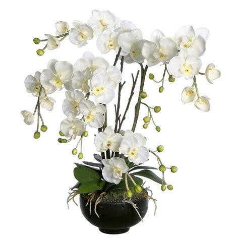 orchidea in vaso trasparente orchidee phalaenopsis