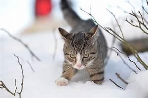 Katze Im Haus Halten : katzen im winter uelzener versicherungen ~ Lizthompson.info Haus und Dekorationen