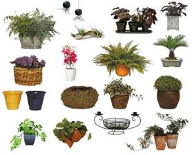 plants flowers potting on