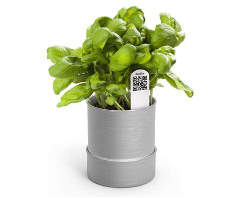 Piantare Basilico In Vaso piantare basilico ortaggi consigli di coltivazione