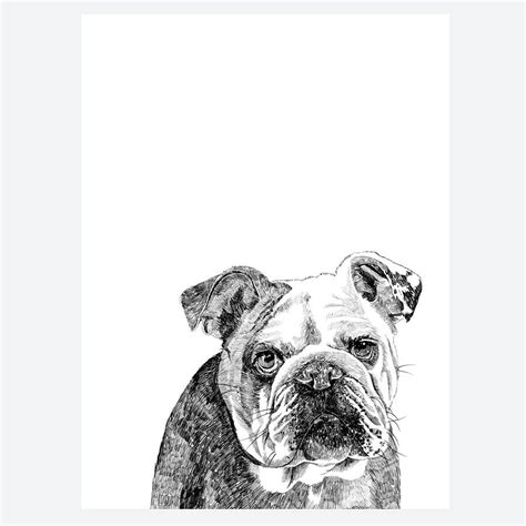 bulldog print  ros shiers notonthehighstreetcom