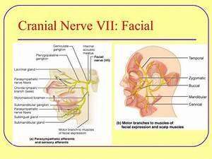 Motor Cranial Nerves Examination