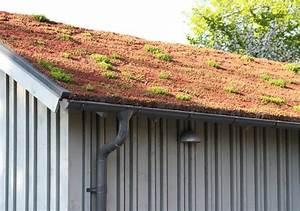 Extensive Dachbegrünung Aufbau : extensive begr nung von schr g und flachd chern k ding berlin ~ Whattoseeinmadrid.com Haus und Dekorationen