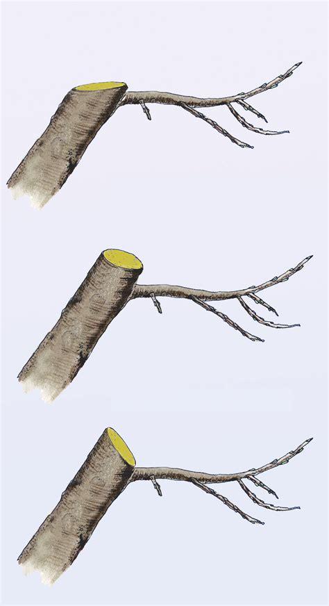 alten apfelbaum schneiden apfelbaum schneiden selbst de