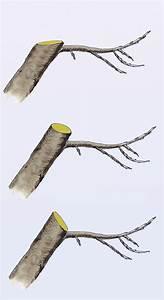 Mein Apfelbaum Anleitung : apfelbaum schneiden anleitung apfelbaum schneiden ~ Lizthompson.info Haus und Dekorationen