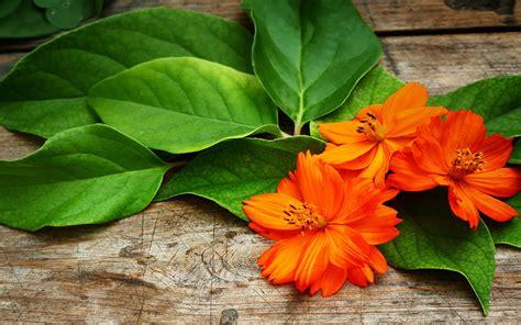 tangerine flowers wallpaper