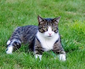 Wie Fange Ich Eine Katze : wenn eine katze hat w rmer wie bekommt man ~ Markanthonyermac.com Haus und Dekorationen