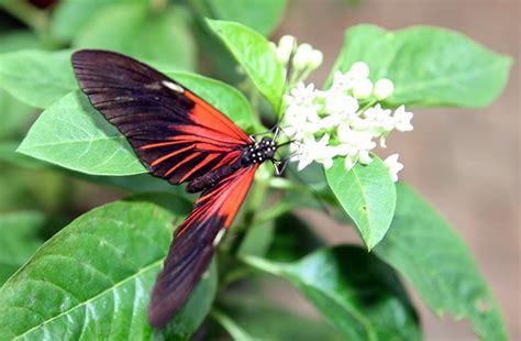 Botanischer Garten Schmetterlinge öffnungszeiten by Tropische Schmetterlinge Im Botanischen Garten In M 252 Nchen
