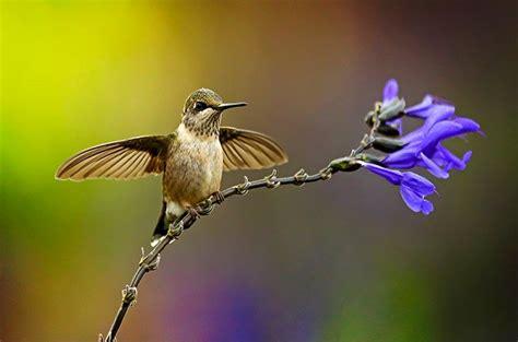 attract  hummingbirds   backyard birds