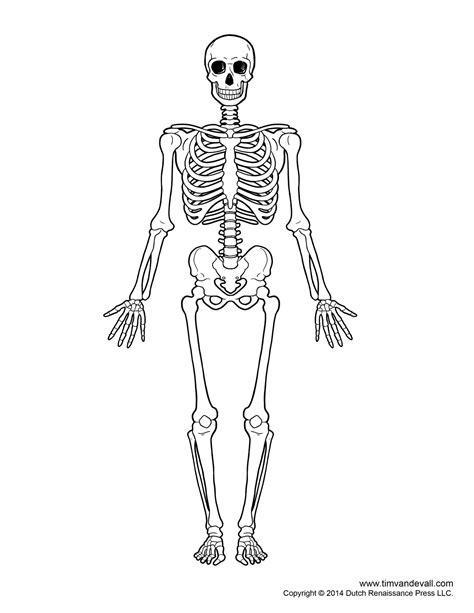 skeleton template printable human skeleton diagram labeled unlabeled and blank