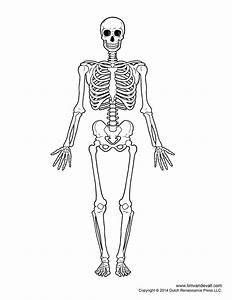 Printable Human Skeleton Diagram  U2013 Labeled  Unlabeled  And