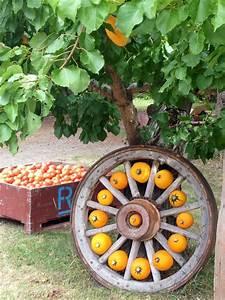 Mini, Pumpkins, Wagon, Wheel, Display, So, Cute