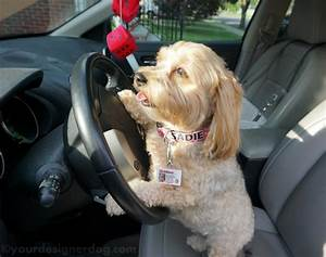 does your dog have a drivers license yet