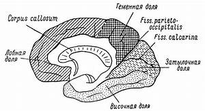 Лечение эндокринных гипертониях