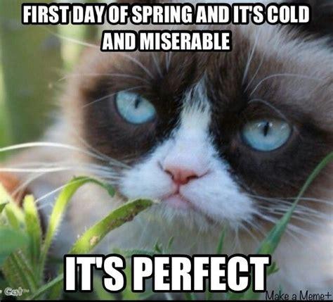 Miserable Cat Meme - 25 best ideas about grumpy cat on pinterest grumpy cat quotes grumpy meme and funny cat quotes