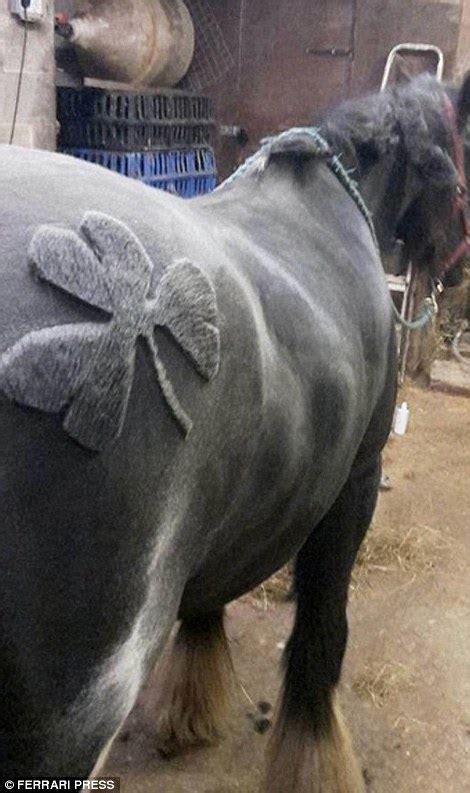 horse clipper  sensation  trimming  series
