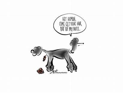 Poodles Fictional Characters Poodle