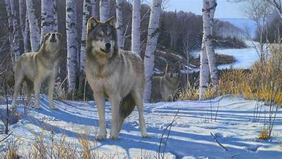 Wolf Wolves Pack Gathering Desktop Nature Grey