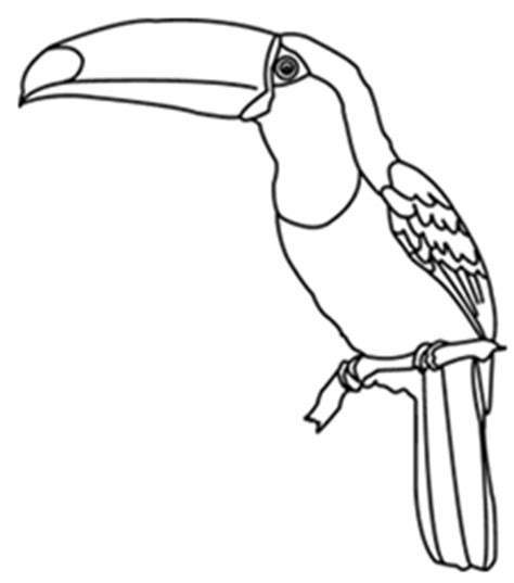 toucan clipart black and white toucan black and white clipart best