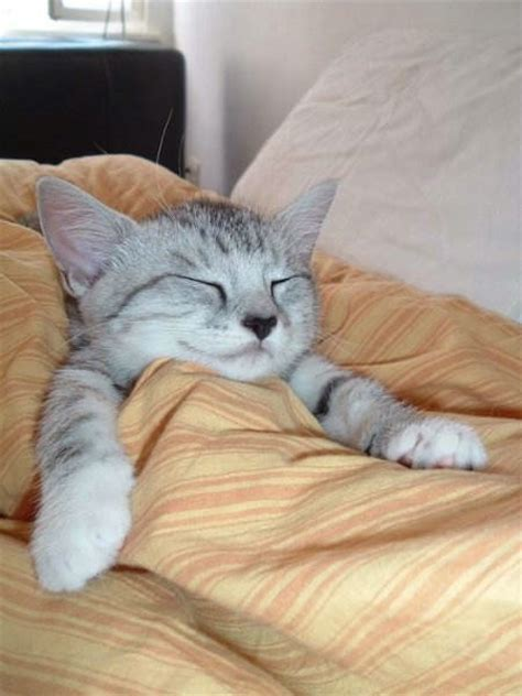 sleeping cat sleeping cat a a day
