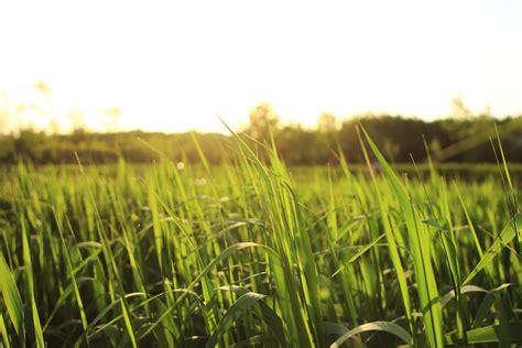 green grass  scenery  photo  pixabay