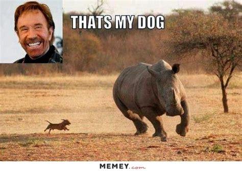 Rhino Memes - rhino memes funny rhino pictures memey com