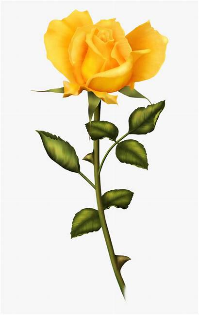 Yellow Rose Clipart Flower Kindpng