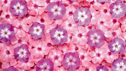 Pink Flowers Wallpapers Flower Purple Backgrounds Girly
