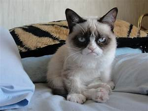 Grumpy Cat Pictures & HD Wallpapers | Hd Wallpapers