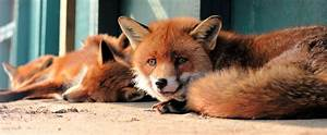 Fox | Turn the Page  Fox