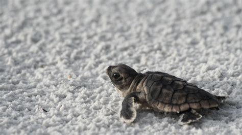 Baby Animals Wallpaper Hd - baby turtle wallpaper with 58 items