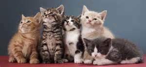 multi cat managing a multi cat household