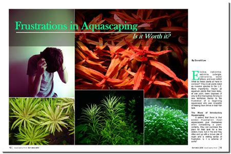 Aquascaping Magazine by Aquascaping World Magazine Frustrations In Aquascaping