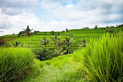 Indonesia Bali Pemandangan Sawah Alam Pertanian Pedesaan